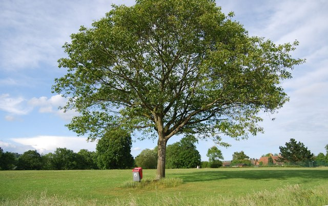 Large tree, Shipbourne Common - geograph.org.uk - 1349585