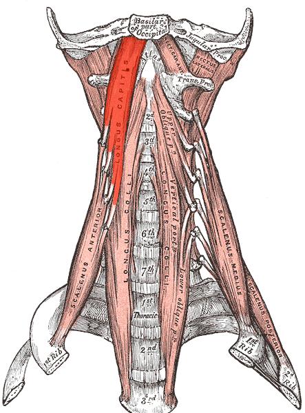 Longus capitis