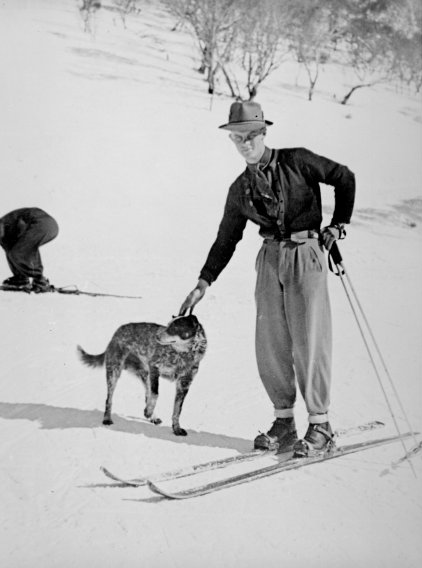 Man on skis patting cattle dog