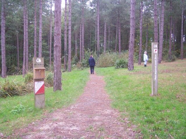 Parkhurst Forest - geograph.org.uk - 72266