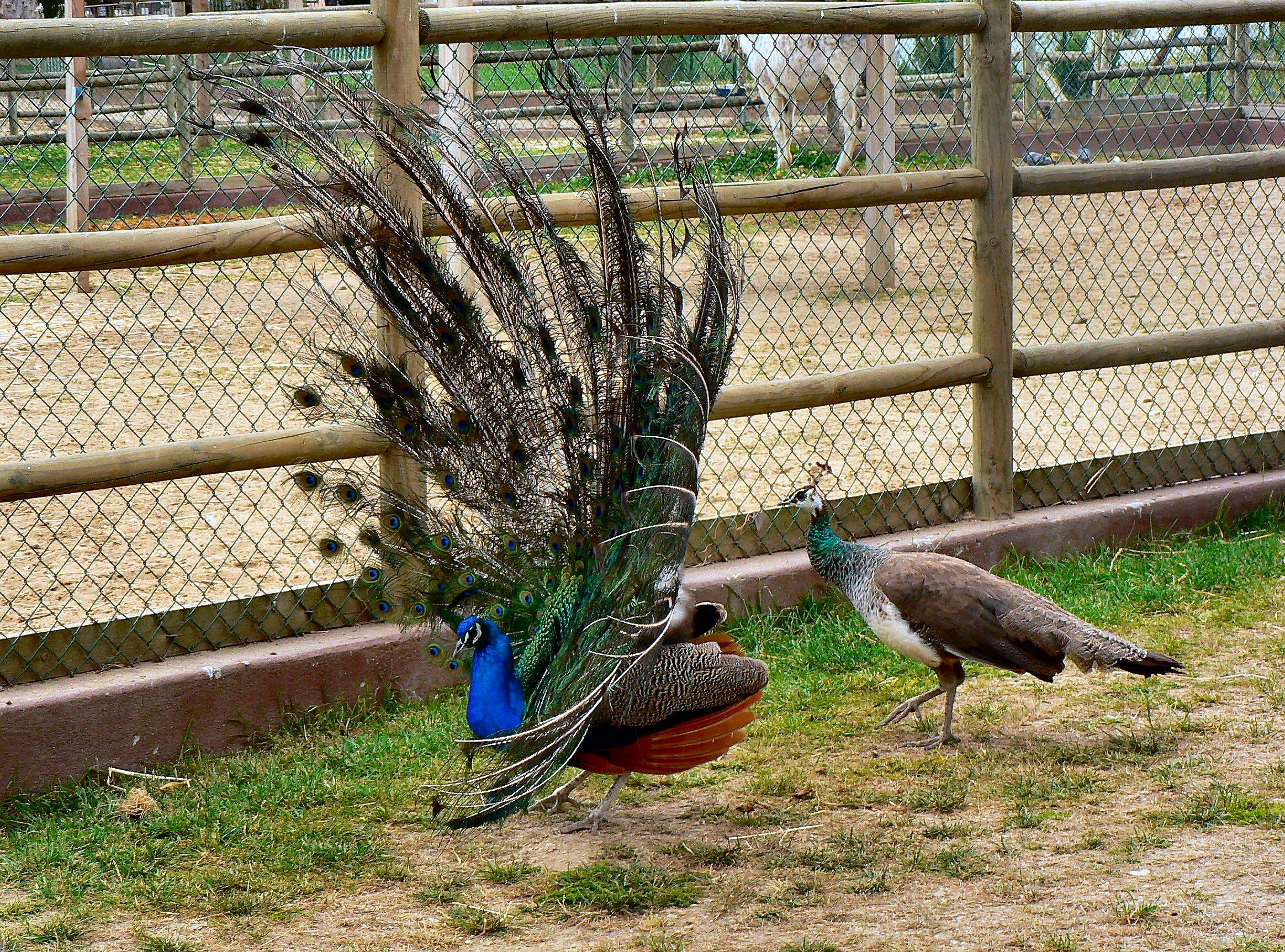 Условия для выращивания домашней птицы