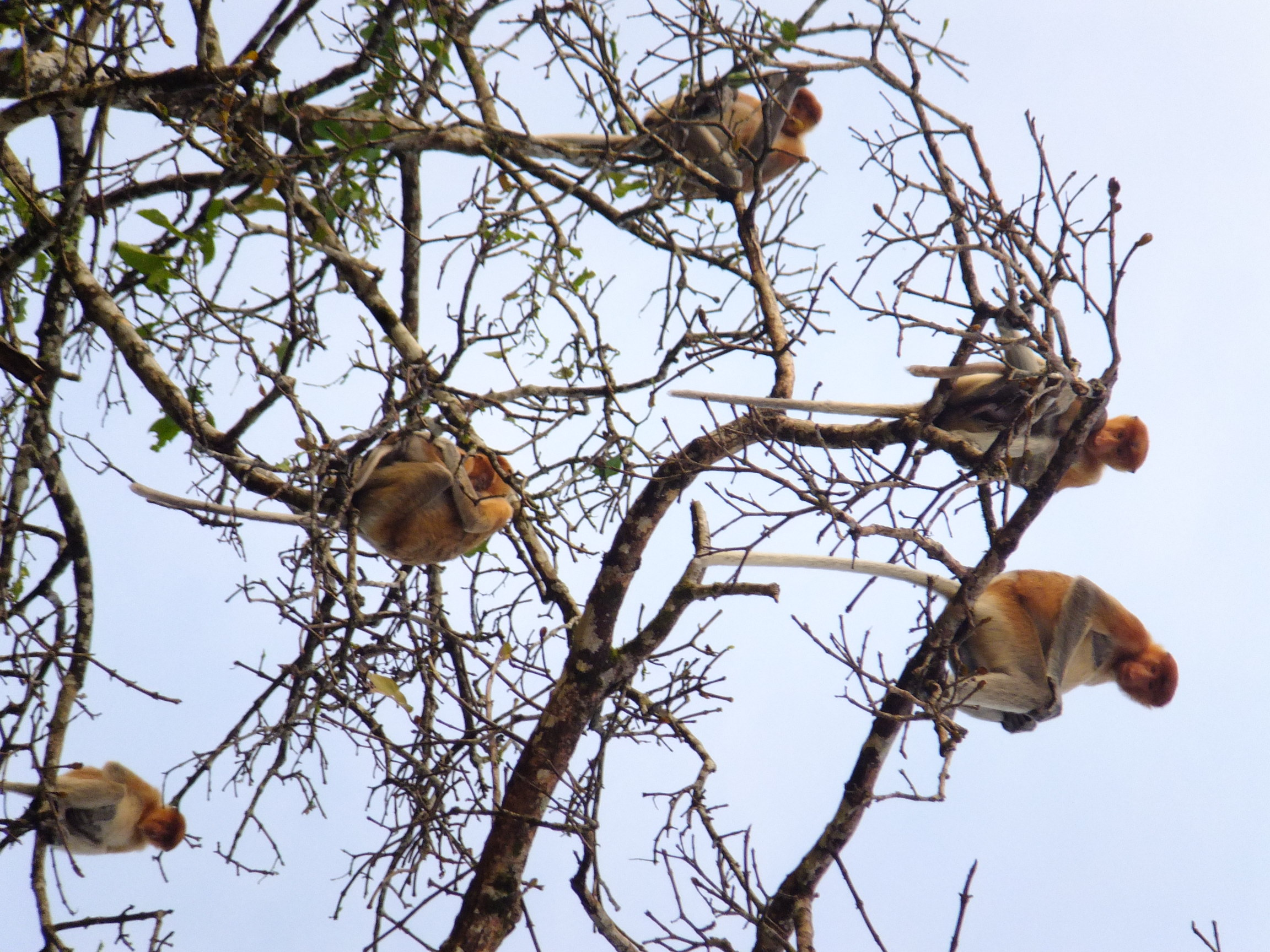 Image result for monkeys in trees