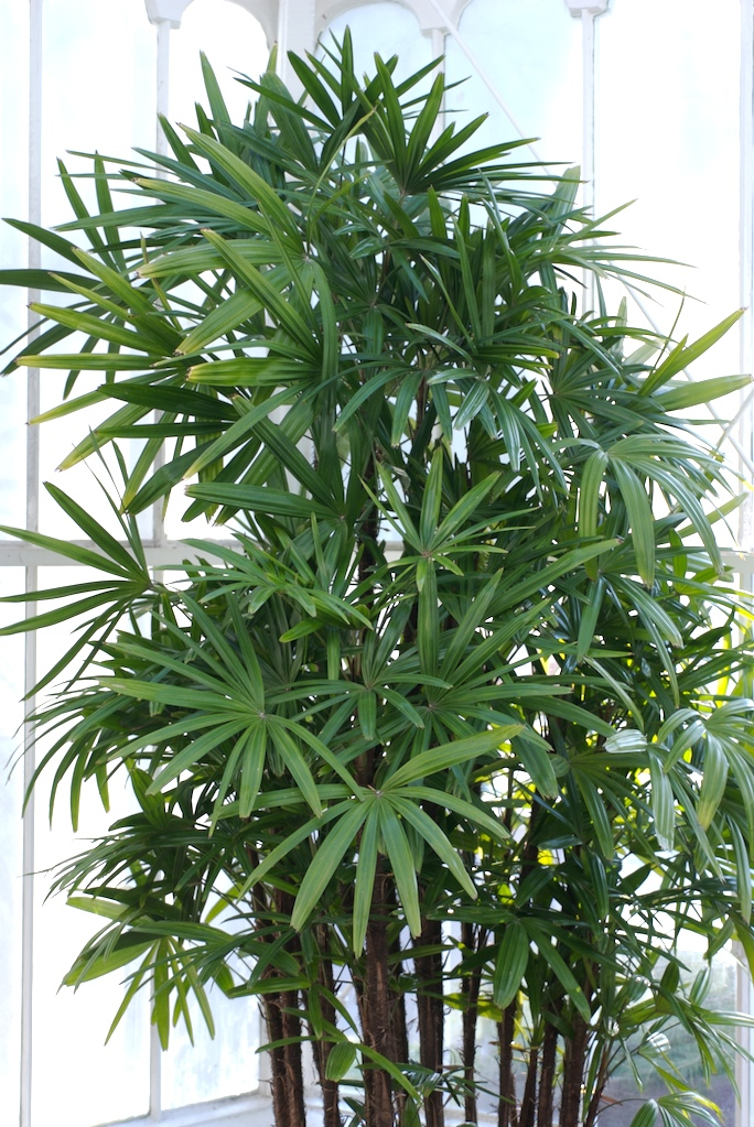 plantas purificadoras de aire síndrome edificio enfermo