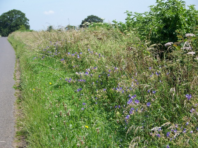 File:Roadside verge near Alderton - geograph.org.uk - 1382104.jpg