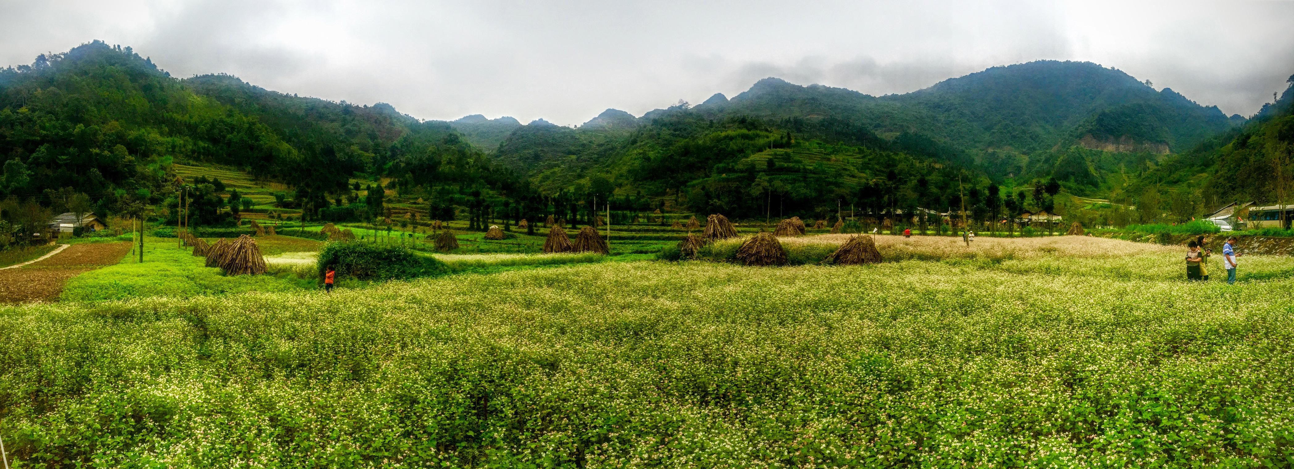 File S U1ee7ng L U00e0 U0110 U1ed3ng V U0103n H U00e0 Giang Vietnam Panoramio 2