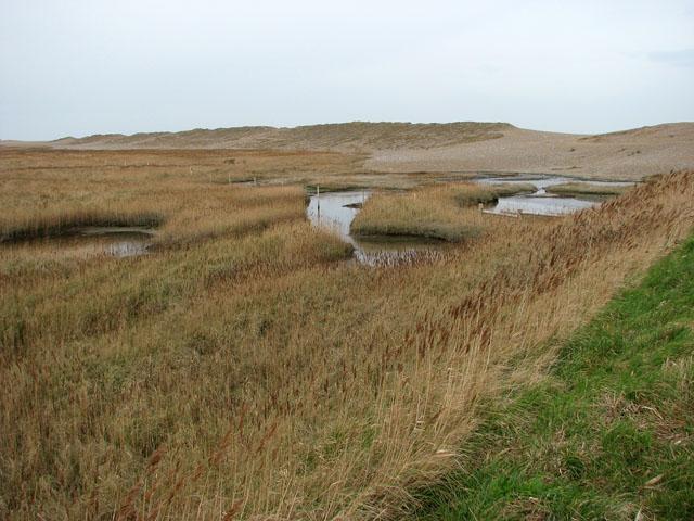 Salt marsh behind shingle bank - geograph.org.uk - 1181027