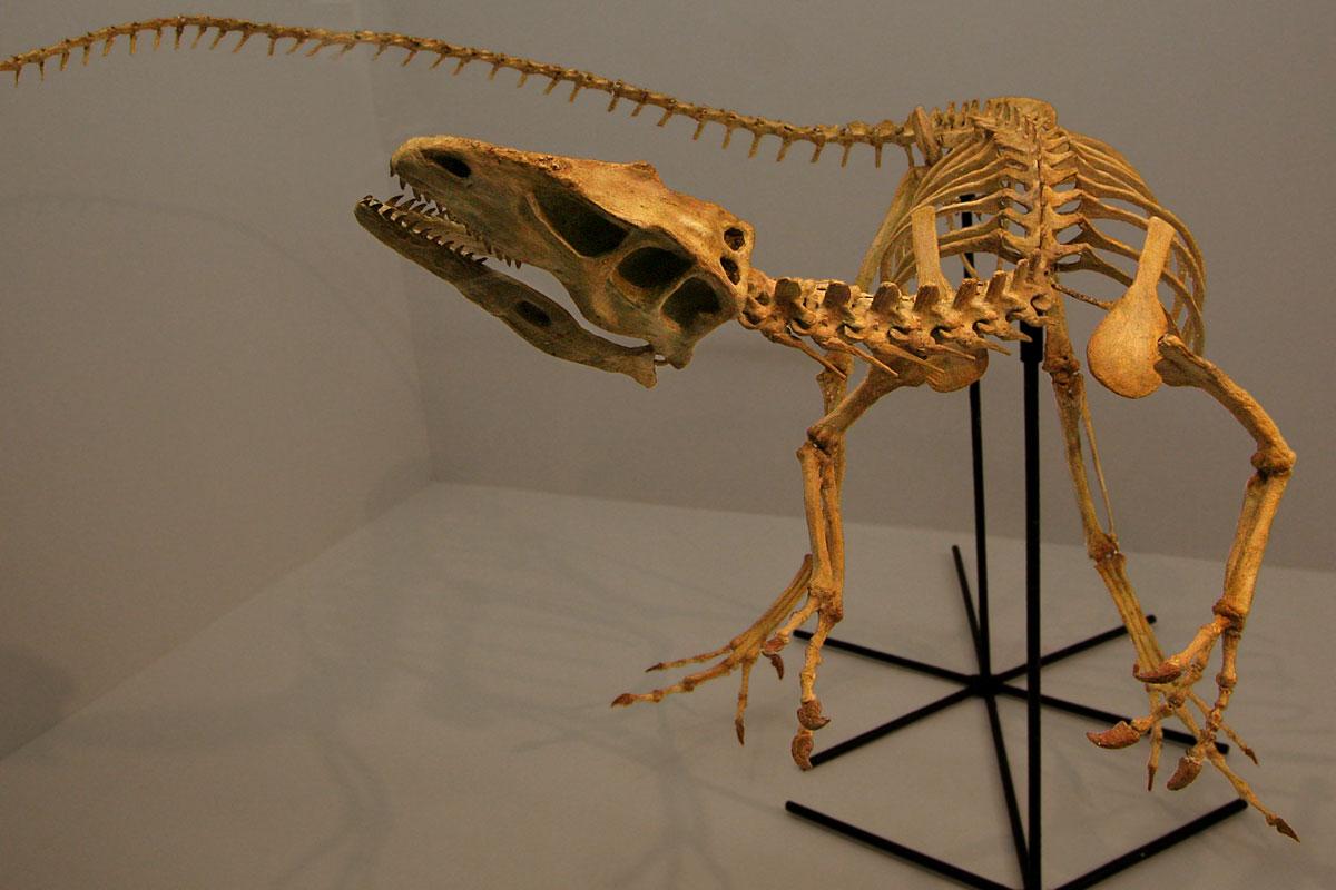 Resultado de imagen de santanaraptor