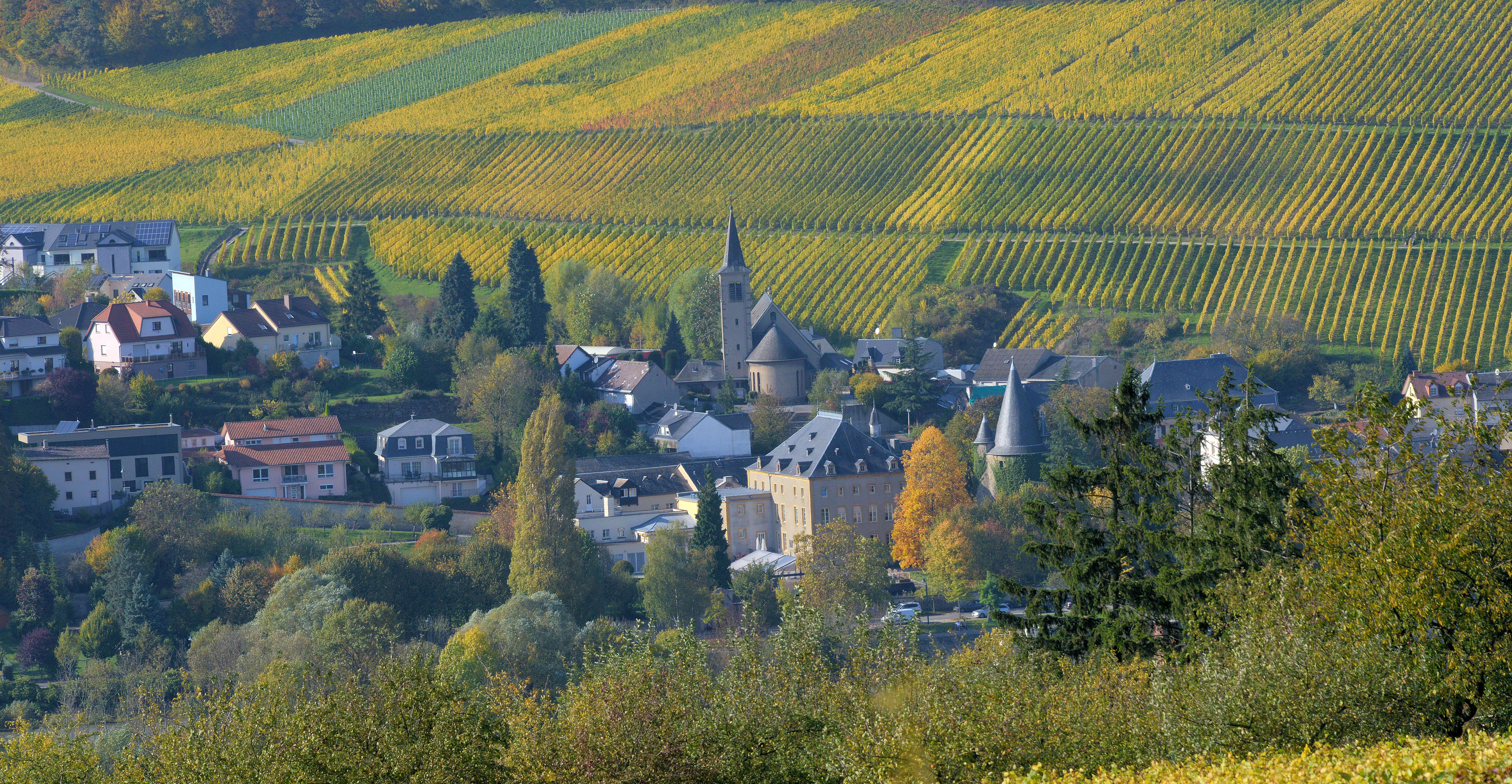 Picture of a movie: Autumn In The Vineyards