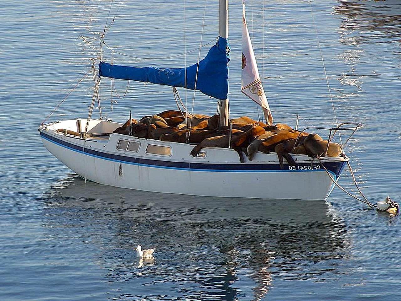 Seal_boat.jpg