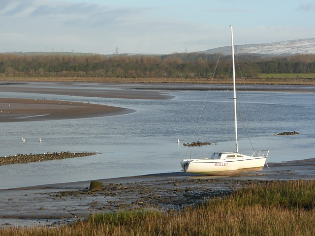 File:Swans on the River Lune, Glasson - geograph.org.uk - 1653788.jpg