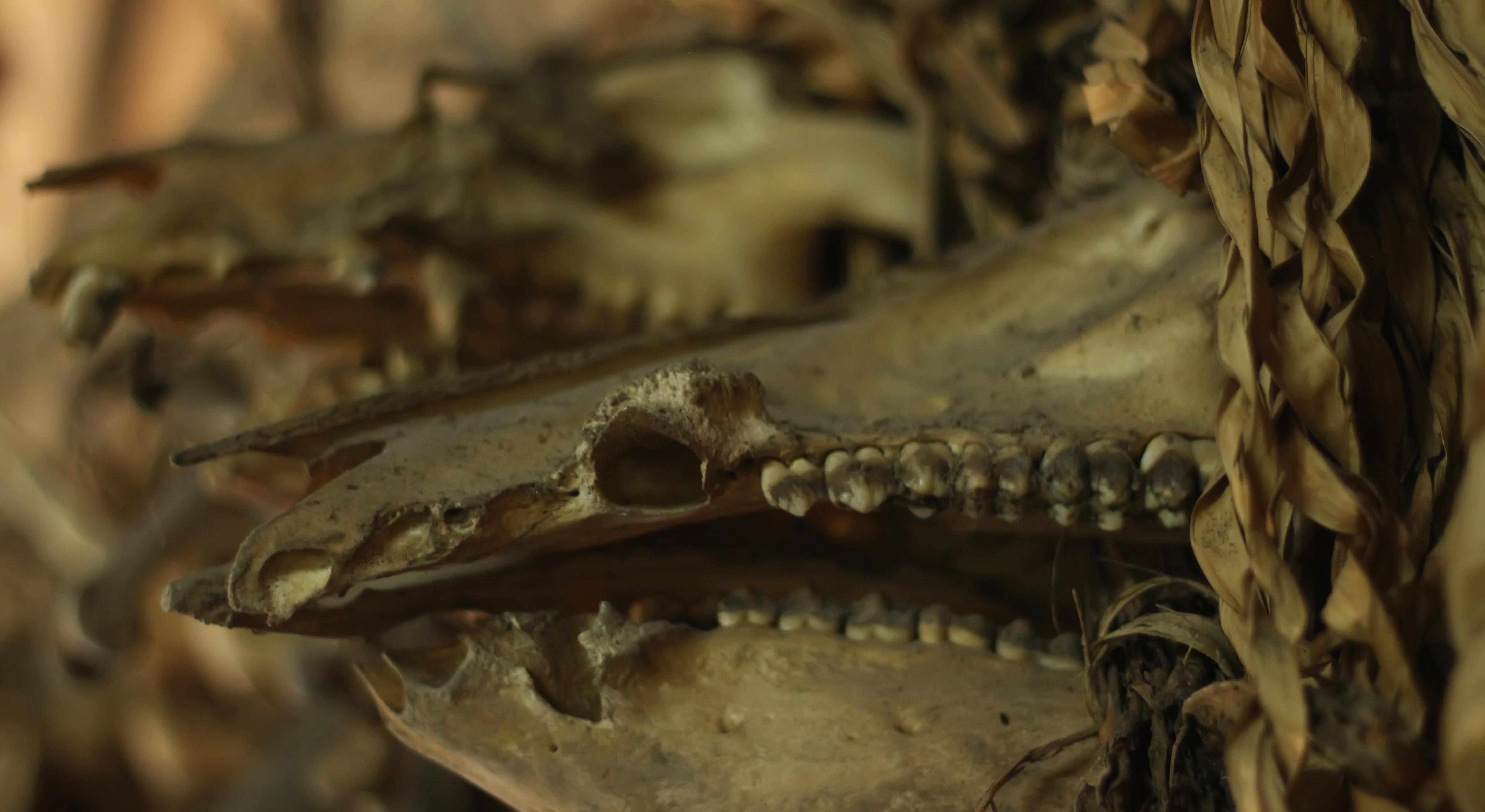 File:Tulang sisa buruan.jpg