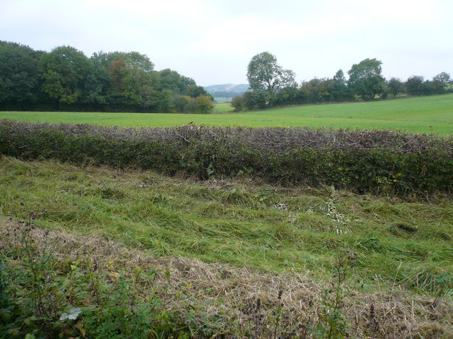 View from dismantled railway track next to Brierley Forest Park - geograph.org.uk - 573878