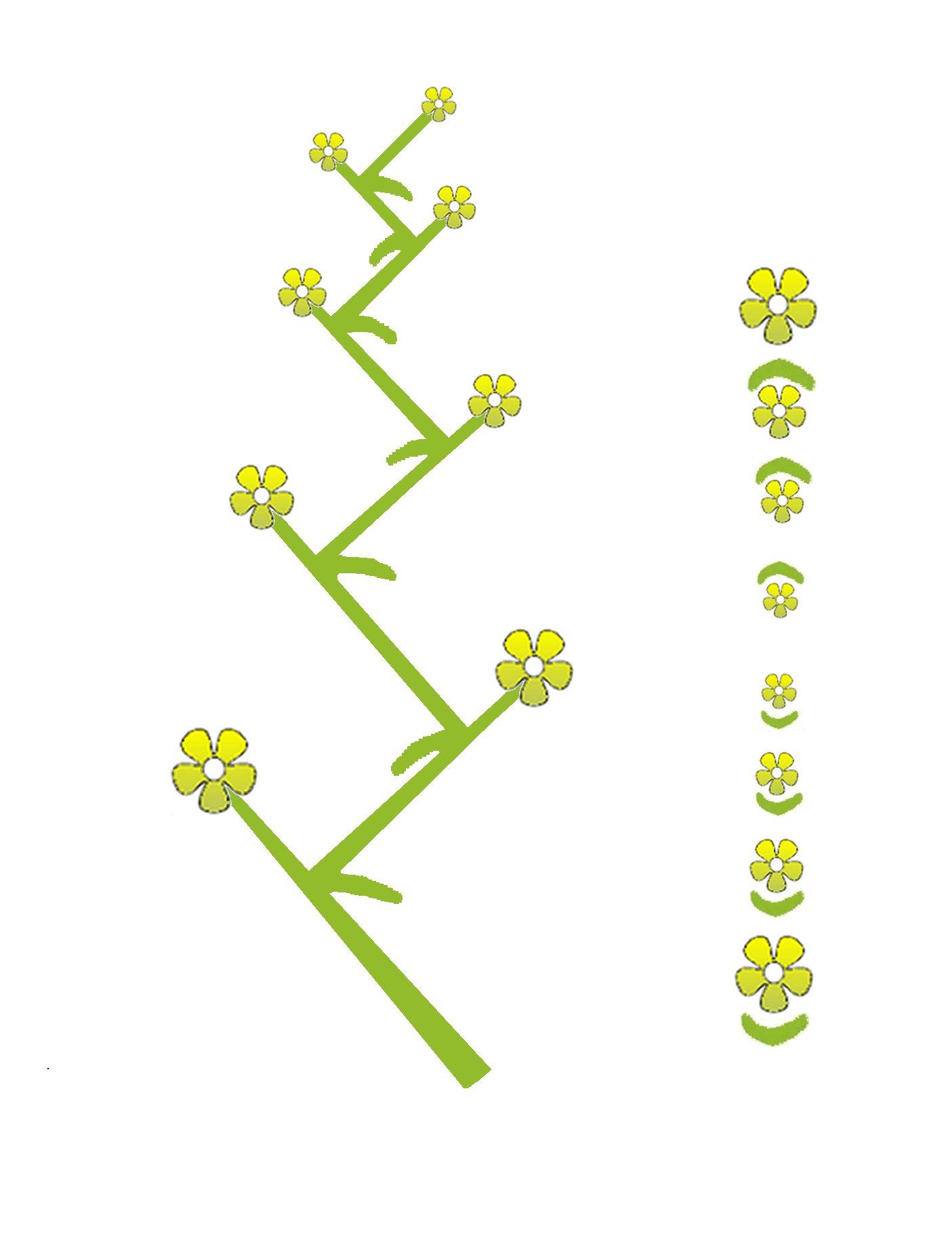 Afbeeldingsresultaat voor waaier bloeiwijze