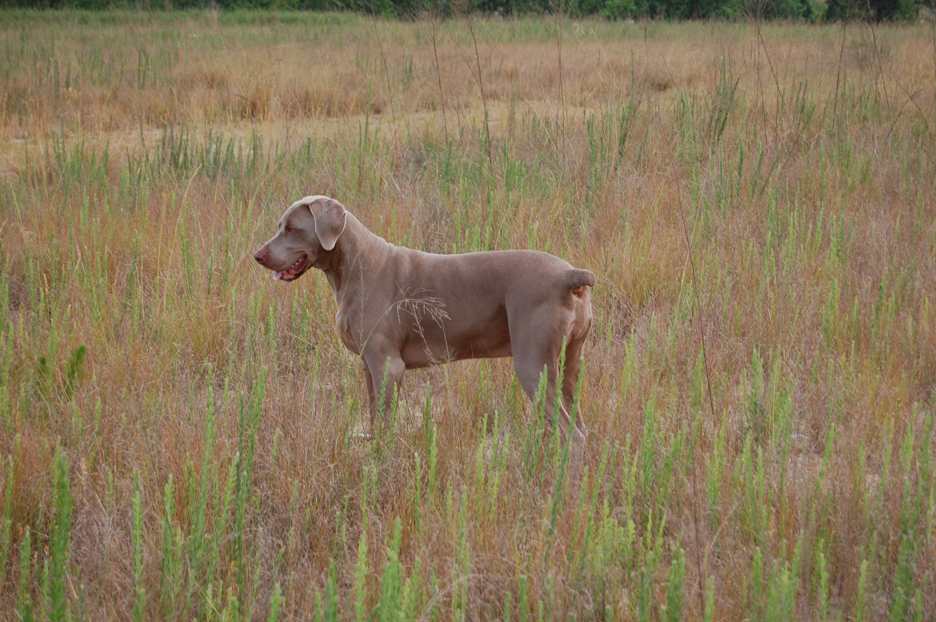 Hunting Dog Video Camera