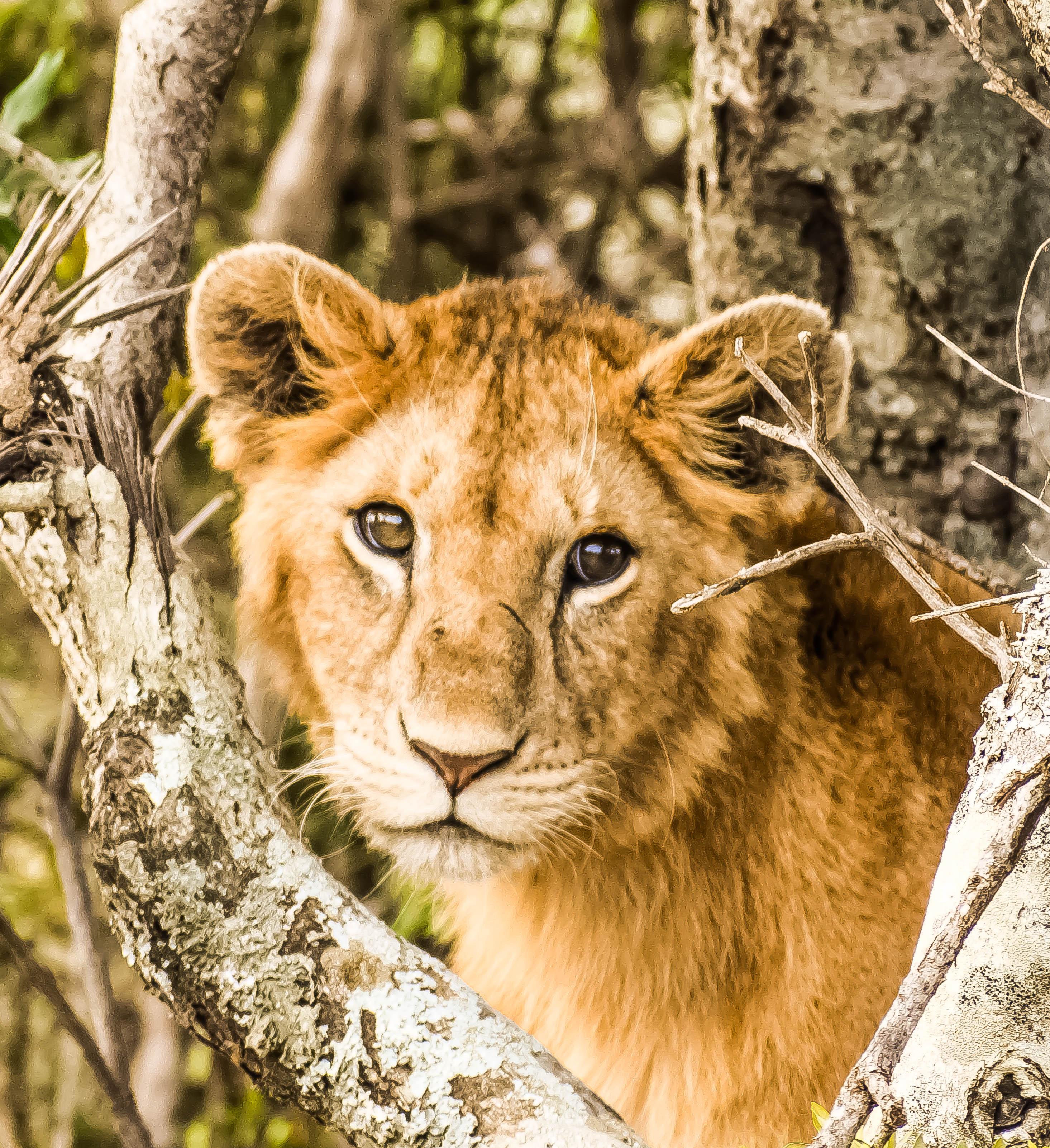 Wildlife - Wikipedia