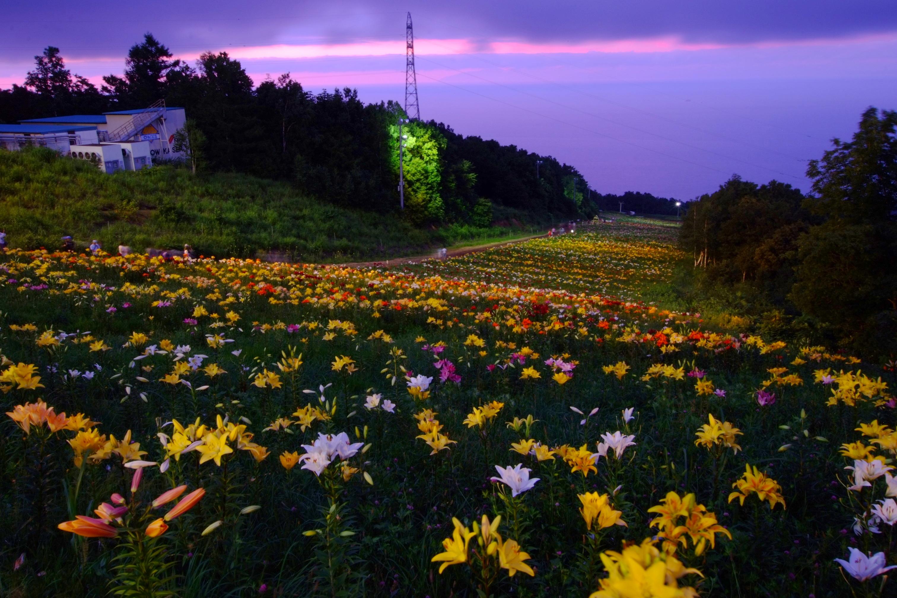 File:オーンズ春香山ゆり園(Onze Harukayama lily garden) - panoramio ...