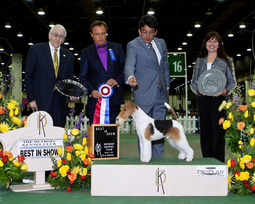 Detroit Kennel Club Dog Show
