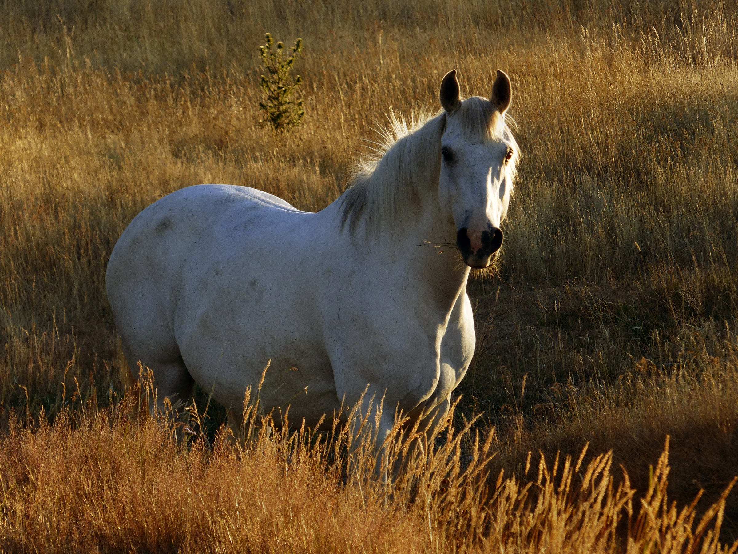 Western Horse Behavior and Training Understanding Breaking and Finishing Your Horse