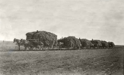 Alfalfa hay on the way to Clayton, New Mexico, circa 1915. Alfalfa hay, 1915.jpg