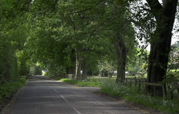 Avenue of trees, Rosedale Abbey - geograph.org.uk - 177609