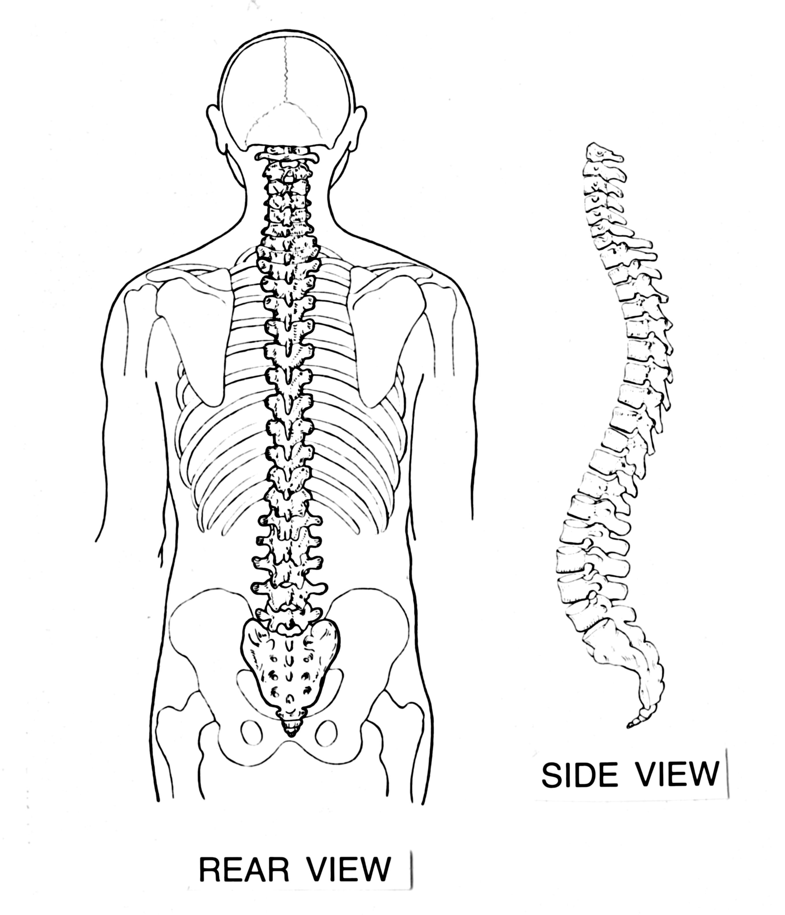 Descrizione backbone psf