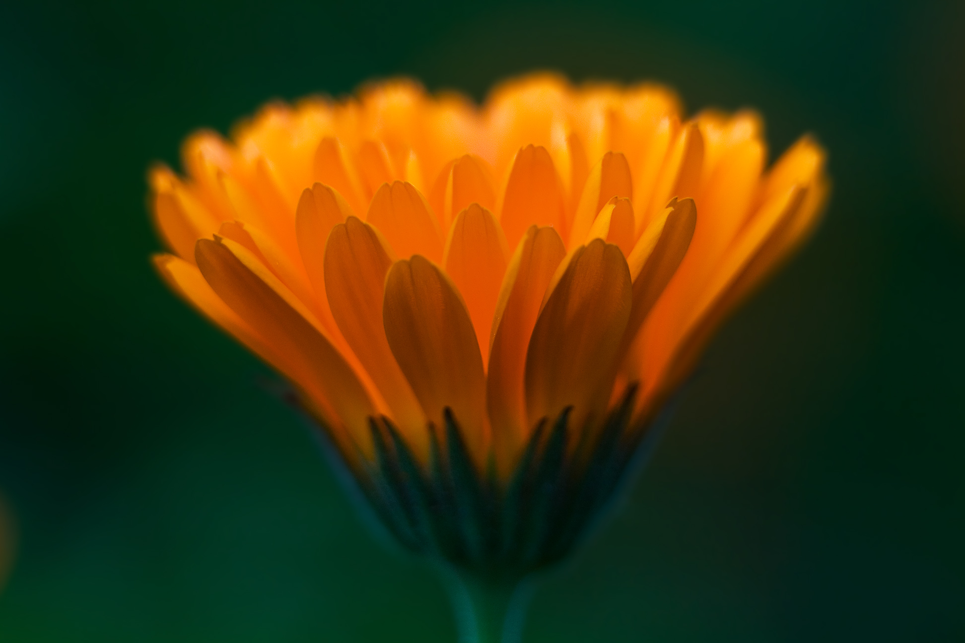 Butterfly Jungle Happy Birthday October Babies Its Calendula Time