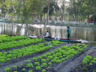 chinampas xochimilco - photo #29