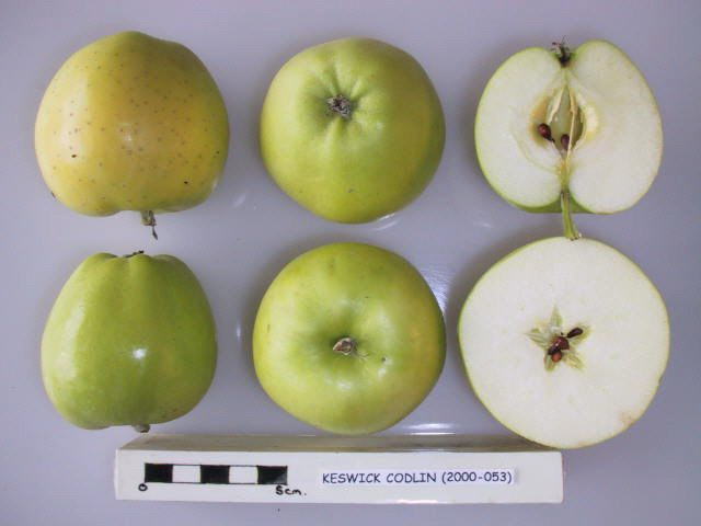 Datei:Cross section of Keswick Codlin, National Fruit Collection (acc. 2000-053).jpg