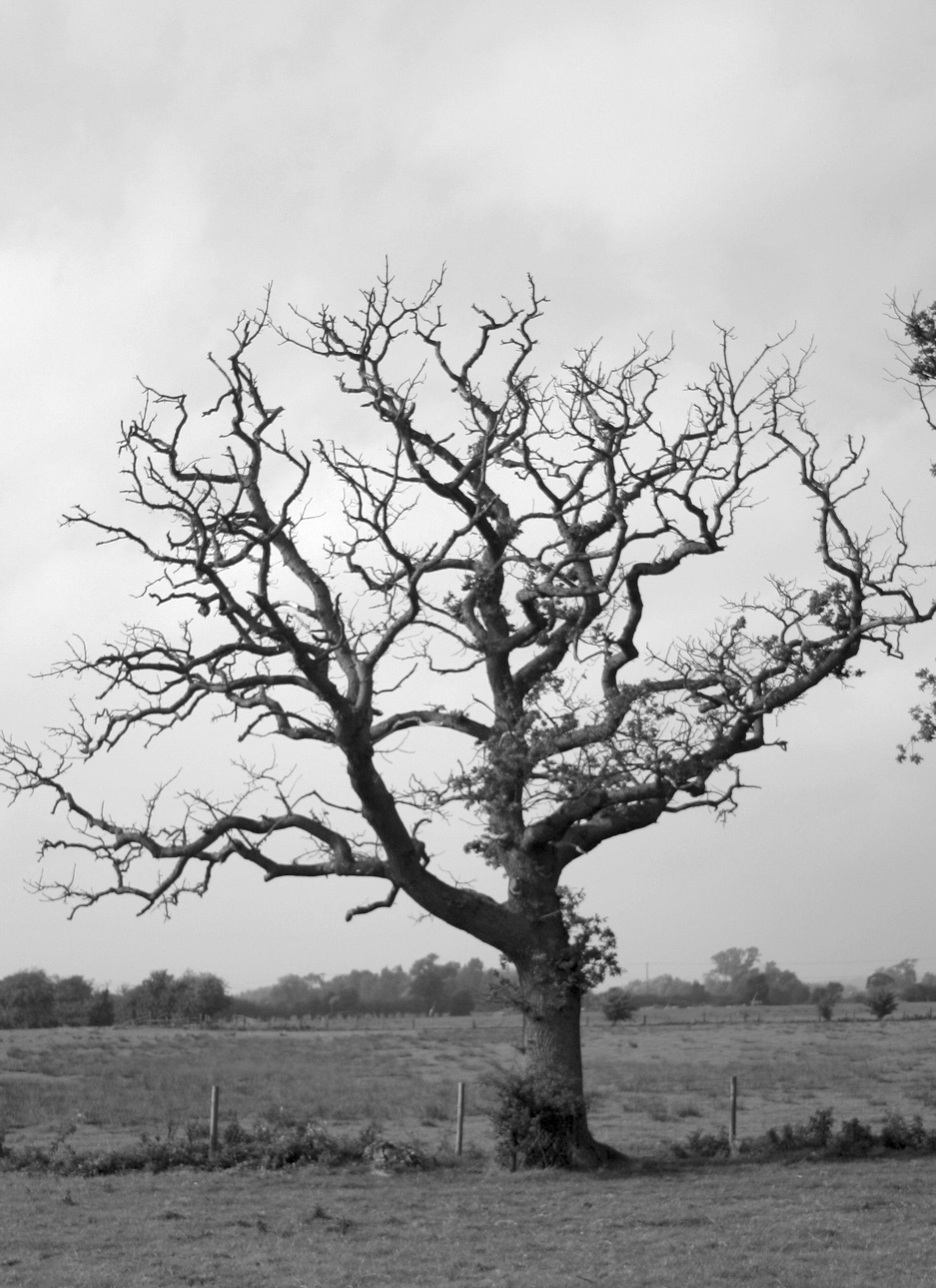 File:DeadTree.jpg