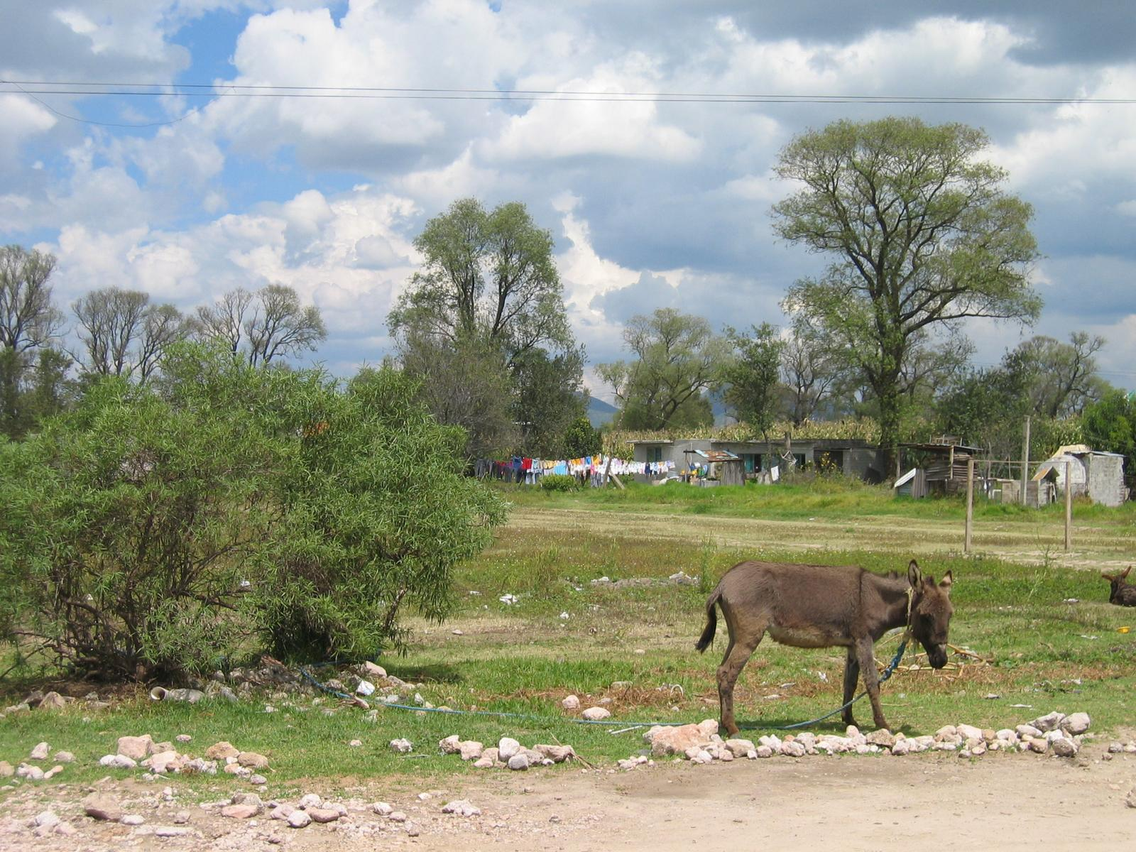 File:Ejido A-Tocuila Texcoco Mexico.jpg - Wikimedia Commons