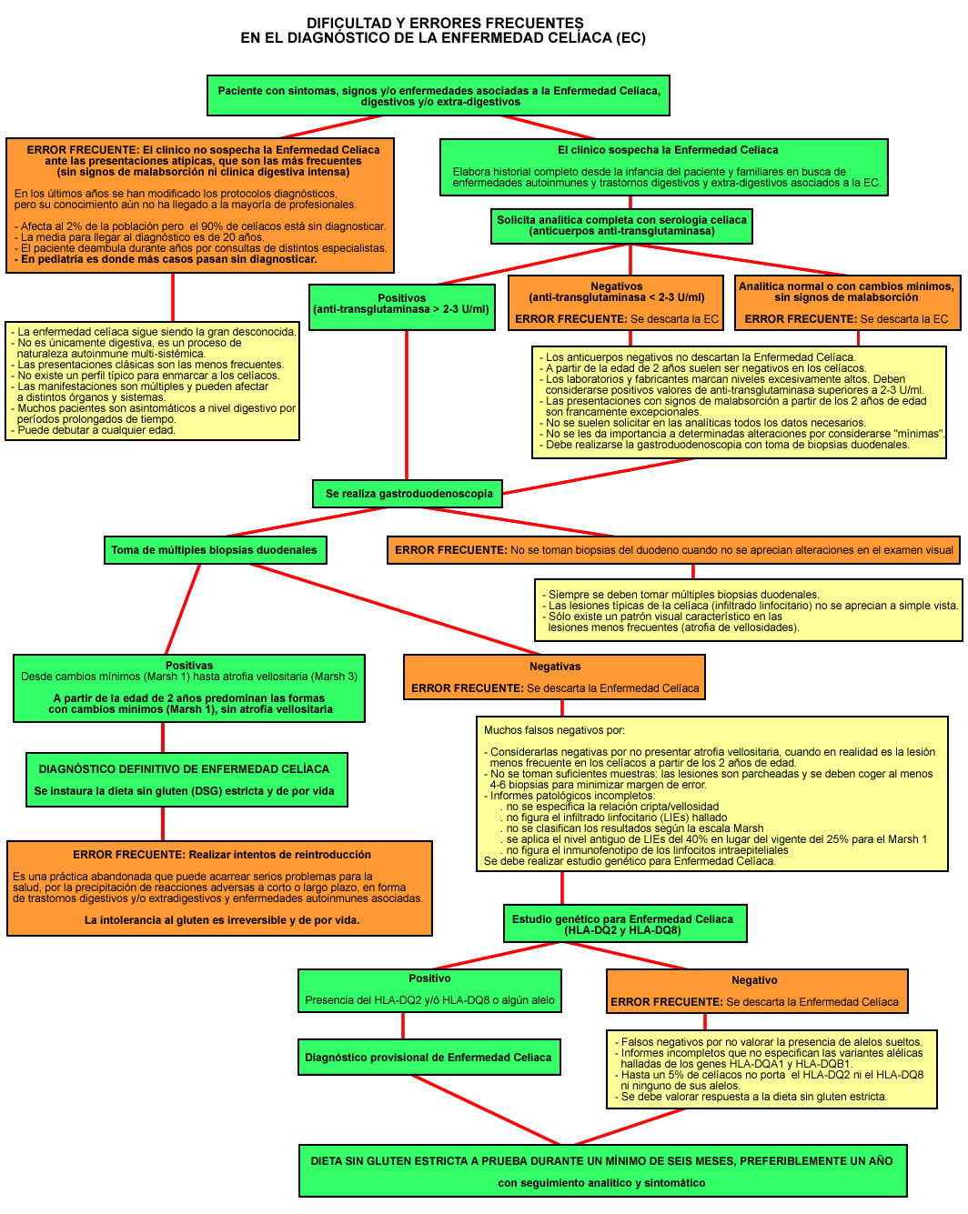 Archivo:Enfermedad Celíaca - Diagrama errores diagnósticos ...