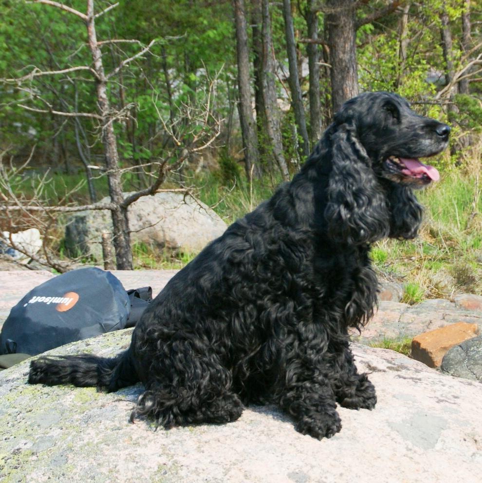 Image Result For Dog Hunting Training