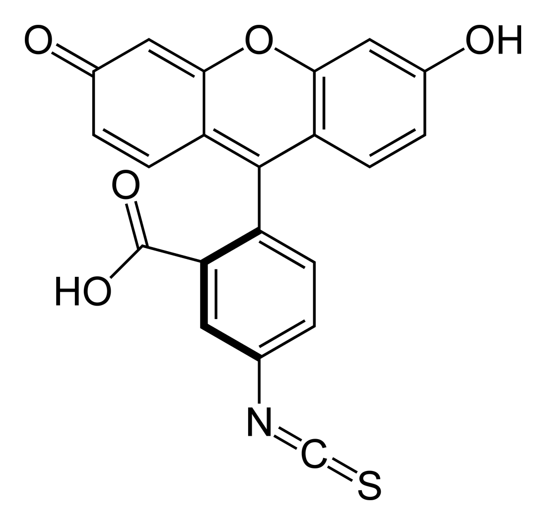 Fluorescein isothiocyanate - Wikipedia
