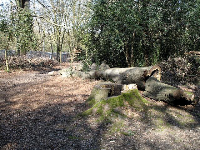 Fallen tree on Newmans hill - geograph.org.uk - 367754