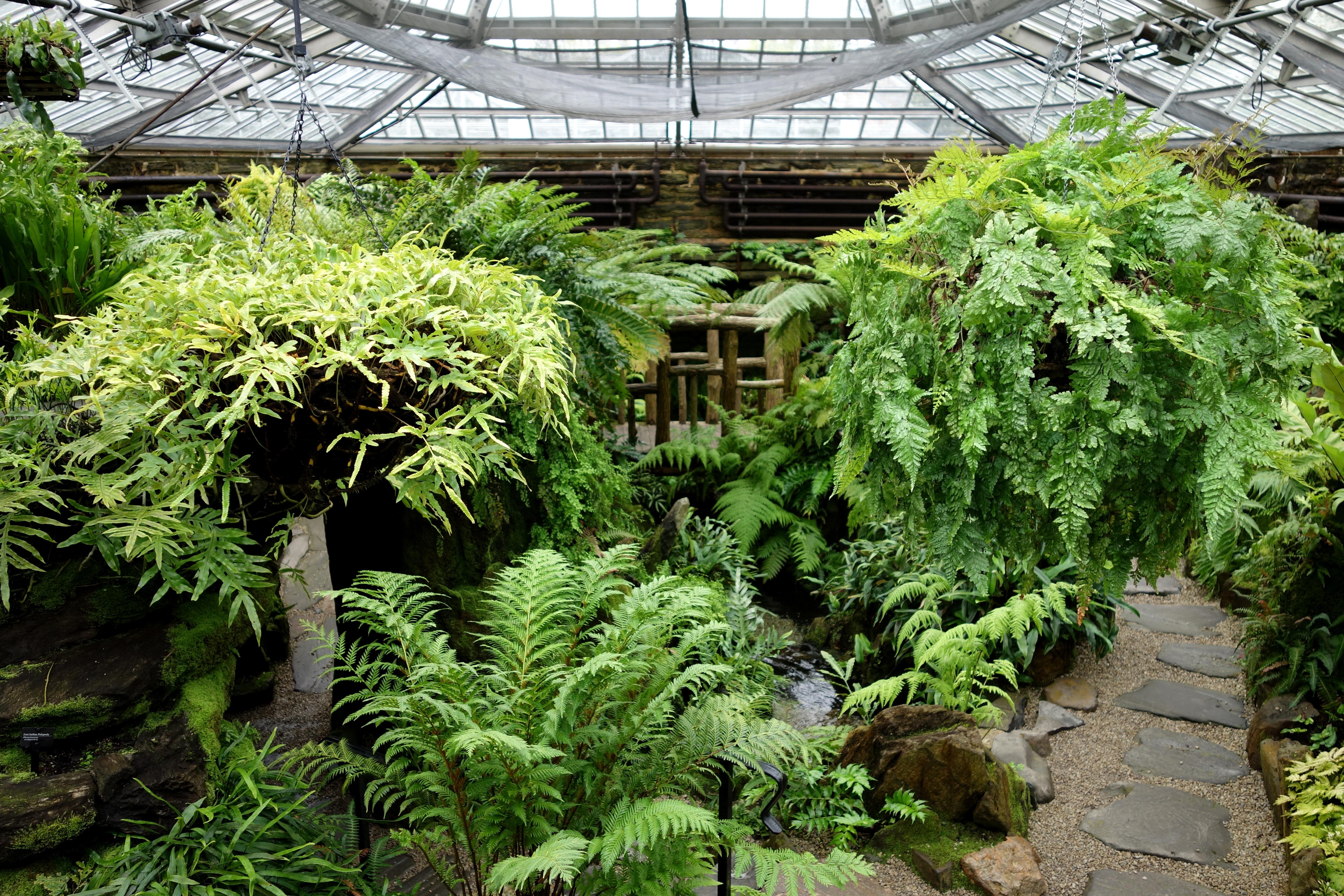 file fernery interior view   morris arboretum   dsc00168
