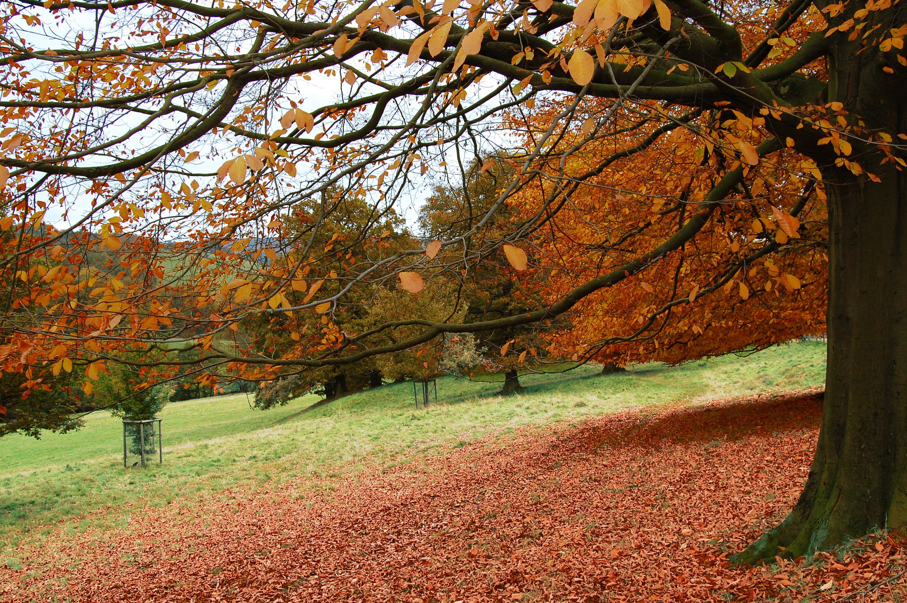 дерево листья парк  № 438578 бесплатно