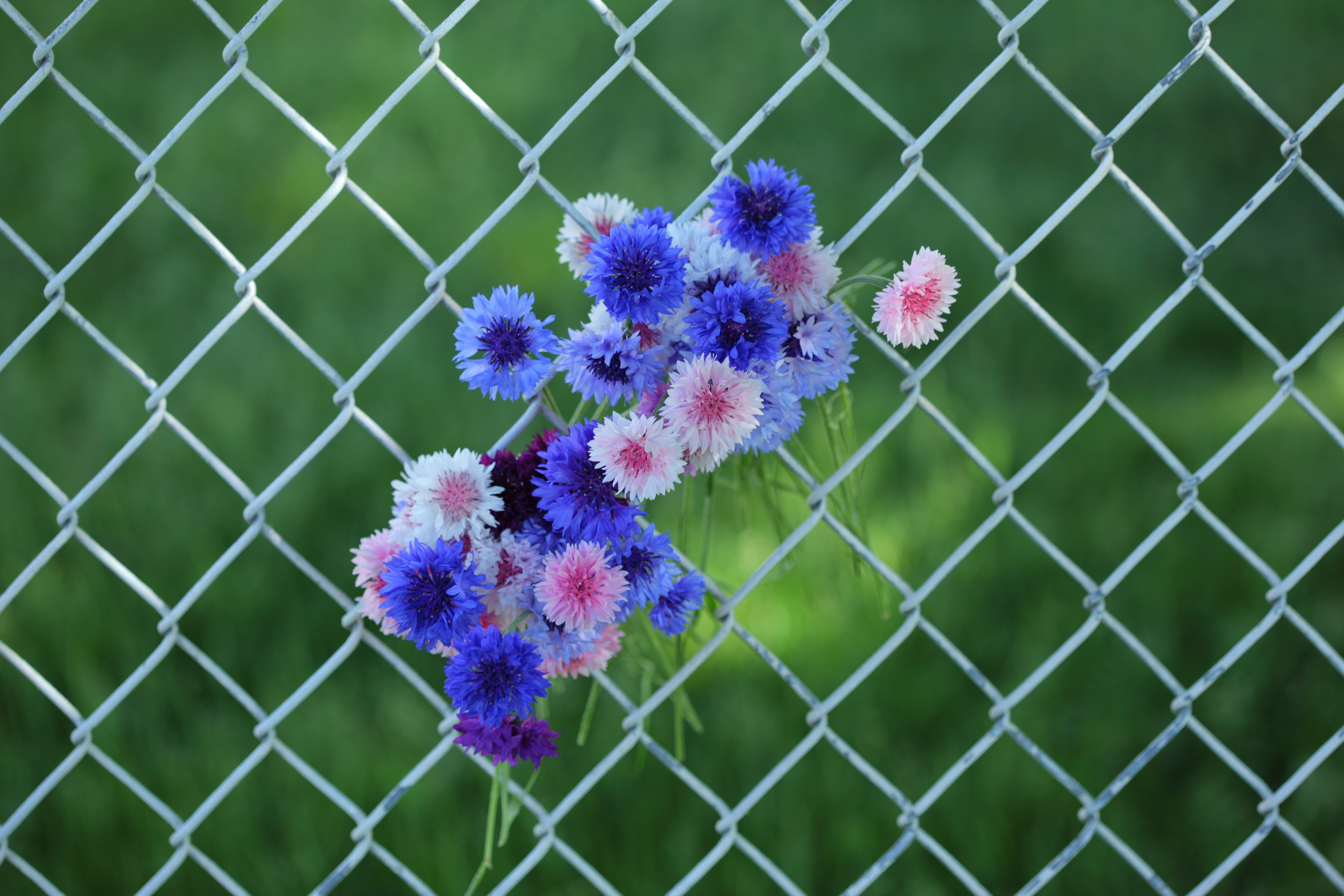 File flowers in a wire net fence g
