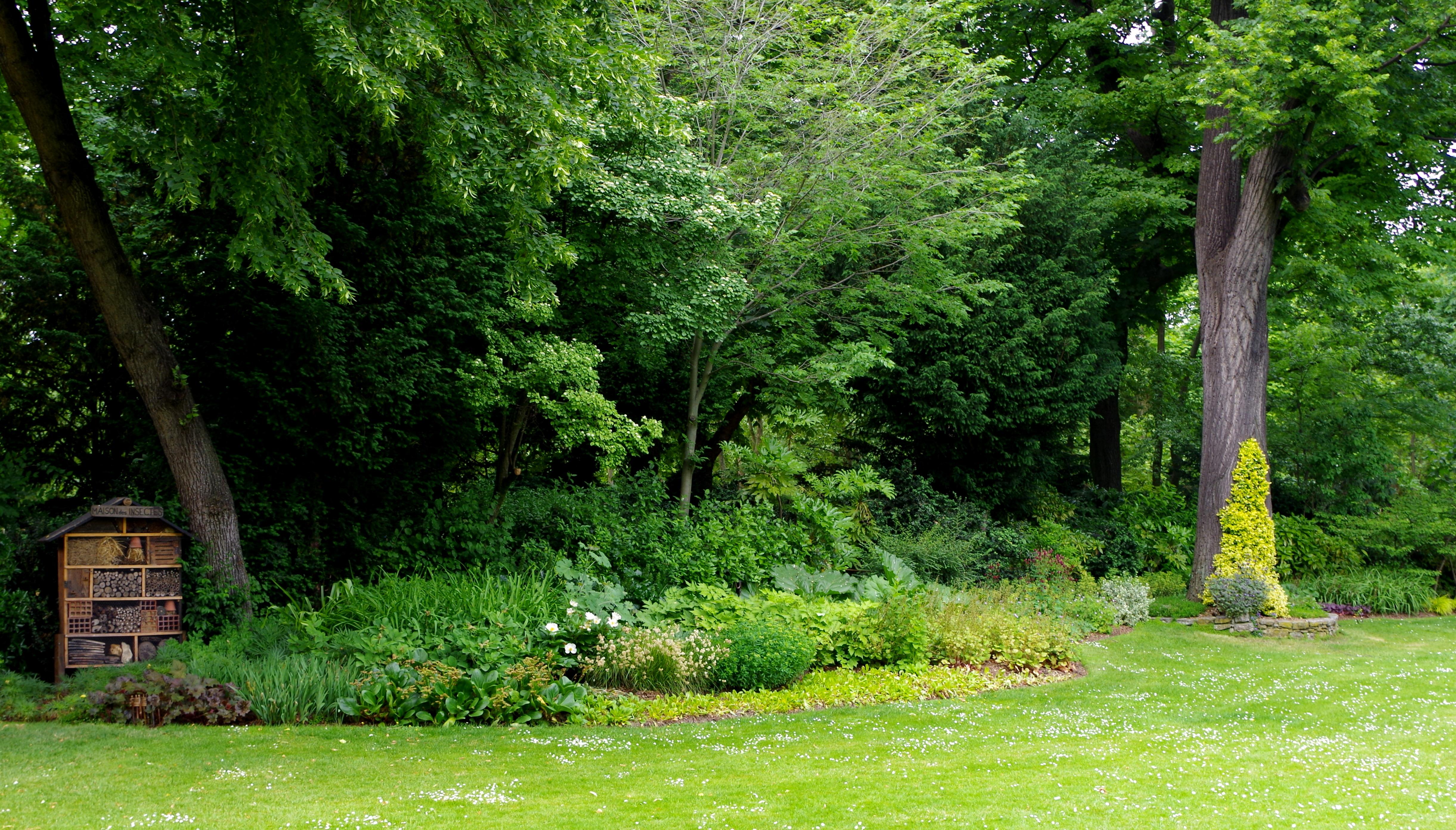 File jardin du luxembourg pelouse et arbres jpg for Arbres jardin du luxembourg