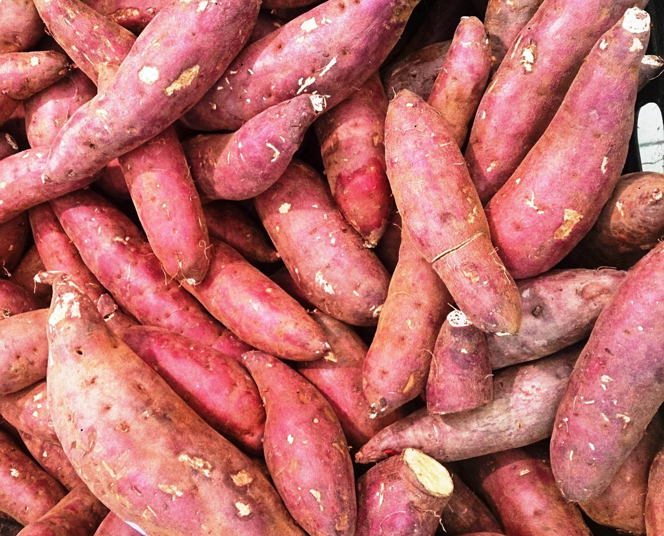 Watts Farms Have Grown The Uk S First Commercial Sweet Potato Crop