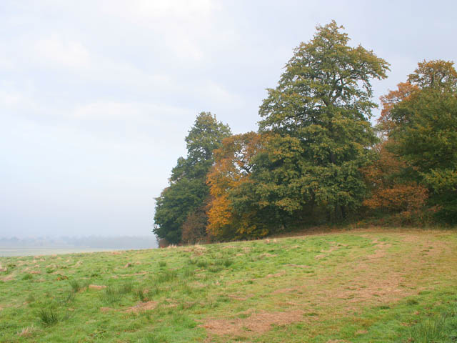 Old Park Wood - geograph.org.uk - 604037