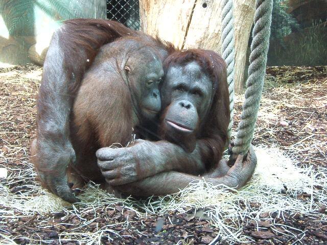 Jeux de dupes au jardin des plantes codean sur for Jardin animaux paris