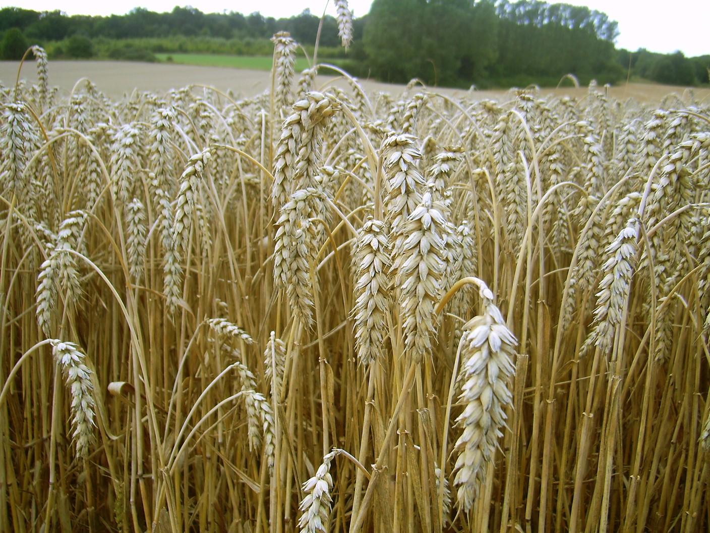 CO2 in der Luft entzieht Lebensmitteln Nährstoffe
