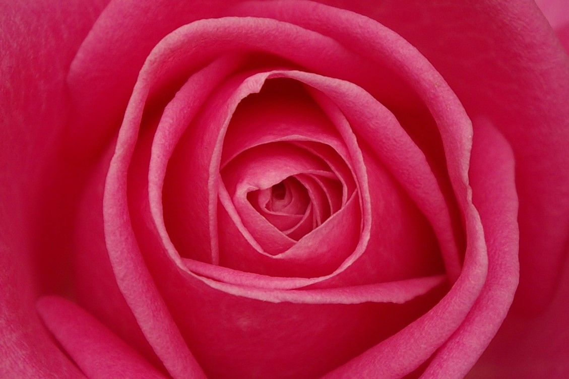 Image Result For Can Rose Petals
