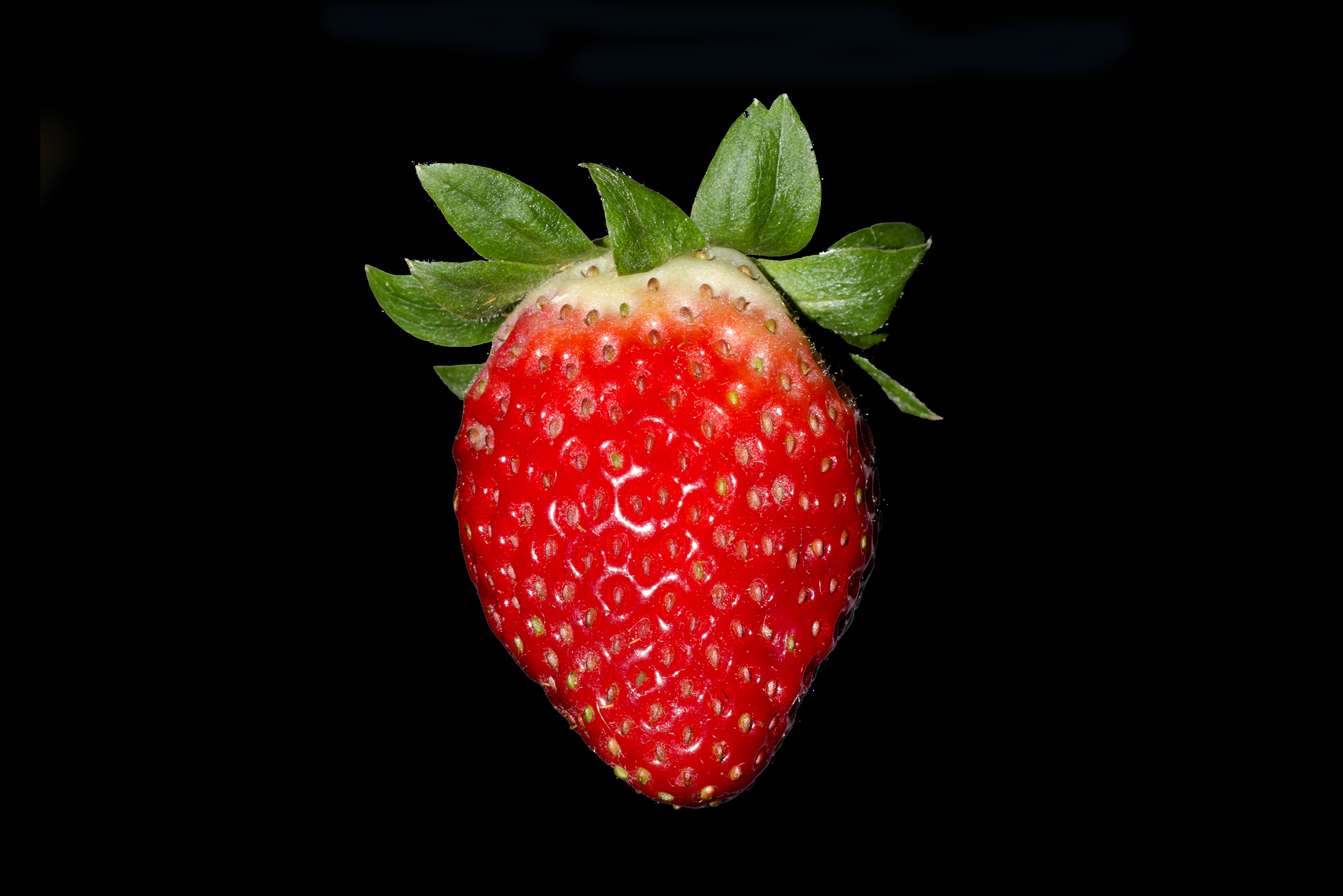 strawberry wikipedia