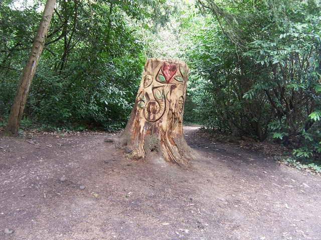 Tree Stump in Holly Hill Woodland Park - geograph.org.uk - 755474
