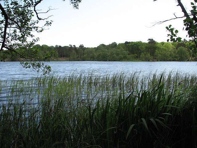 View across Fritton Decoy - geograph.org.uk - 806141