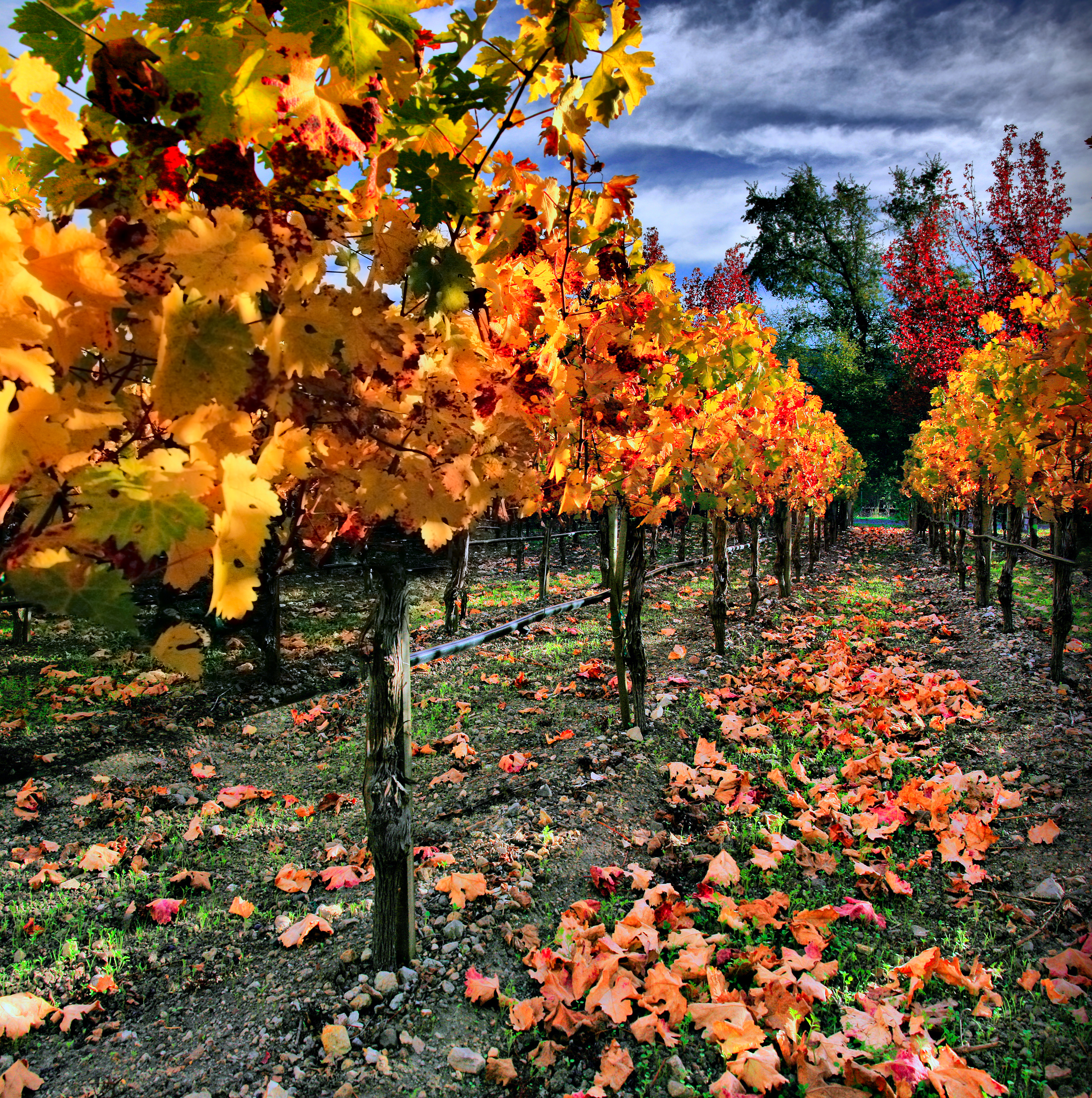 California Wine Country Tours Reviews