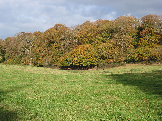 Afternoon sun on Dymock Wood - geograph.org.uk - 607696