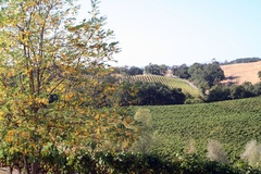 English: Alexander Valley - Sonoma County