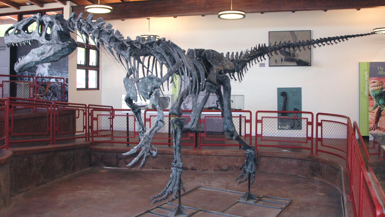 https://upload.wikimedia.org/wikipedia/commons/7/7f/Allosaurus_atrox_Cleveland-Lloyd_Quarry.jpg